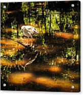 Beauty Of The Bog Acrylic Print by Karen Wiles