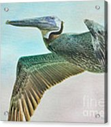 Beauty Of The Pelican Acrylic Print