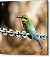 Beauty On Chains Acrylic Print