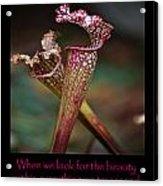 Beauty Pitcher Plants Acrylic Print