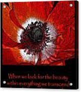 Beauty Red Anenome Acrylic Print