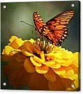 Beauty Rest Acrylic Print