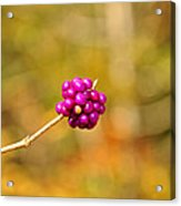 Beautyberry Acrylic Print