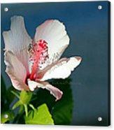 Bee A Flower Acrylic Print