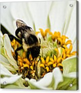 Bee All That You Can Bee Acrylic Print