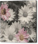 Bee And Daisies In Partial Color Acrylic Print