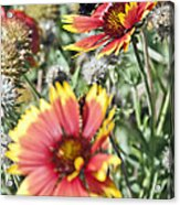 Bee And Flower Acrylic Print