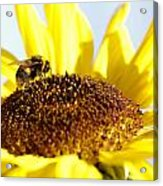 Bee And Flower Acrylic Print by Les Cunliffe