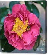 Bee And Wasp On Camellia Acrylic Print