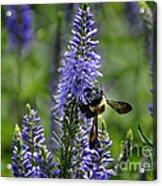 Bee Blue Acrylic Print