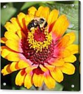 Bee Bright Acrylic Print
