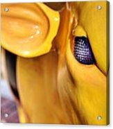 Bee Bullseye Acrylic Print