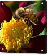 Bee Business Acrylic Print