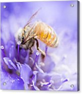 Bee Dream Acrylic Print