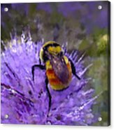 Bee Flower Acrylic Print by Roger Snyder
