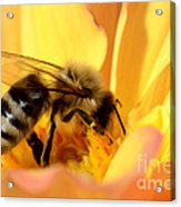 Bee In Flower Acrylic Print