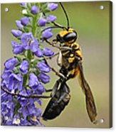 Bee Kind Acrylic Print