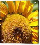 Bee Lunch Acrylic Print