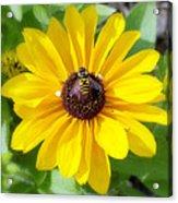 Bee Mine-2 Acrylic Print