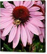 Bee Mine Acrylic Print