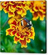 Bee My Friend Miss Marigold Acrylic Print