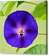 Bee Nirvana Acrylic Print