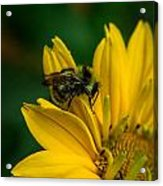 Bee On A Quest Acrylic Print