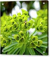 Bee Pollenating Flower Acrylic Print