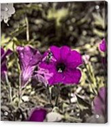 Bee To A Flower Acrylic Print