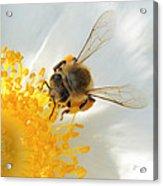 Bee-u-tiful Squared Acrylic Print