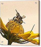 Bee Utiful Day Acrylic Print