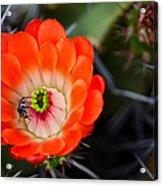 Bee Ware The Thorns Acrylic Print