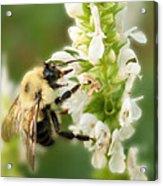 'bee'autiful Morning Acrylic Print