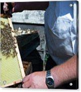 Beekeeper Holding A Brood Frame Acrylic Print