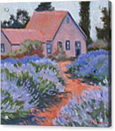 Beekman Lavender Field Acrylic Print