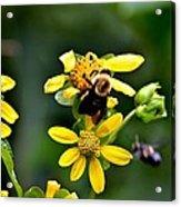 Bees At Work Acrylic Print