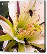 Bees In Blossom Acrylic Print