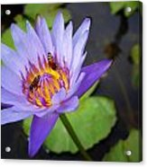 Bees In The Lotus Acrylic Print