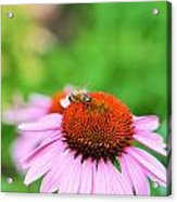 Bees Knees Acrylic Print by Debbie Sikes