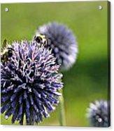 Bees On Globes Acrylic Print