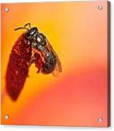 Bee's World Acrylic Print