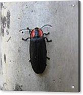Beetlebug's Stroll Acrylic Print