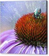 Beetlemania Acrylic Print