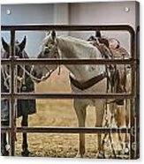Before The Rodeo Acrylic Print