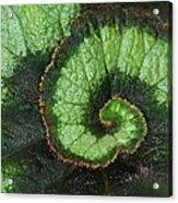 Begonia Leaf 2 Acrylic Print