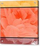 Begonia Petals Triptych Acrylic Print