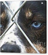 Behind Fences Acrylic Print