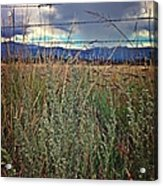 Behind The Fence Acrylic Print