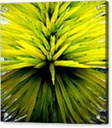 Being Green Acrylic Print