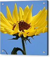 Bright Yellow Happy Sunshine Acrylic Print